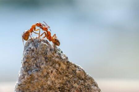 jak pozbyć się mrówek w ogrodzie